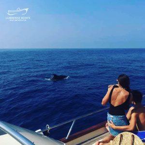 Amalfi coast boat tours from sorrento